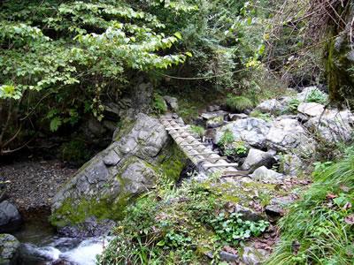 最初の2本柱の丸太橋