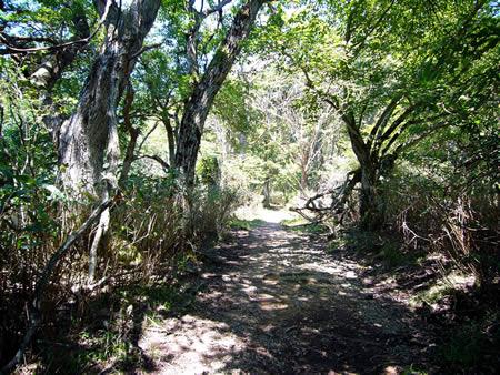 八丁平湿原の東側を通る六尺道