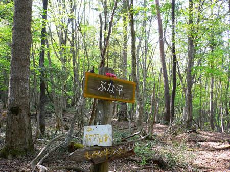 雑木林の中にあるぶな平