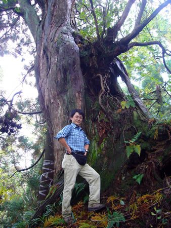 巨大な大杉