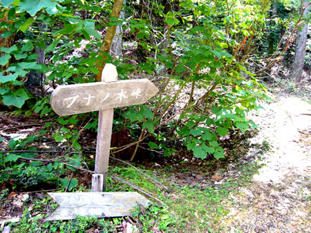 ケヤキ坂峠にあるブナノ木峠への標識