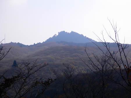 鶏冠のような愛宕山山頂の森