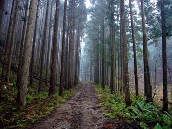 桑谷林道を遡ります
