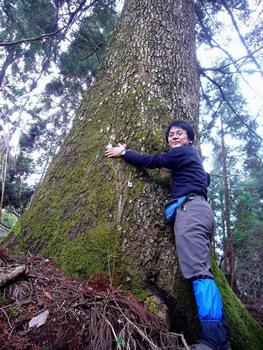 大きなモミの木